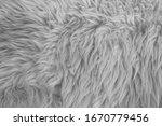 Close Photo Texture Of Animal...