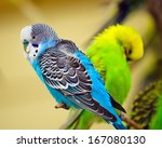 Colorful Parakeet On Tree Branch