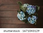 Beautiful Blossoming Blue...