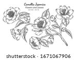camellia japonica flower and... | Shutterstock .eps vector #1671067906