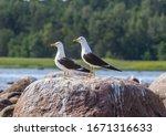 Taxonomy Of Birds. Scandinavian ...