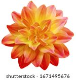 Dahlia Flower Red Yellow....