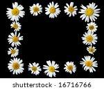 frame from ox eye daisies   Shutterstock . vector #16716766