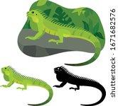 Iguana Lizard Lies On A Stone...