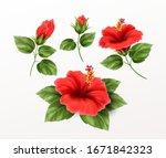 set is beautiful hibiscus... | Shutterstock .eps vector #1671842323