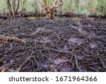 Small photo of The art of nature, Tha Ra Nae Mangrove Forest, Trat Province, Thailand