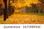 Autumn Forest. Fallen Leaves O...