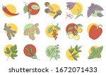 condiments and herbs hand drawn ... | Shutterstock .eps vector #1672071433