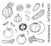 set of hand drawn vegetables.... | Shutterstock . vector #1672376623