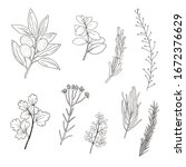 set of hand drawn plant...   Shutterstock .eps vector #1672376629