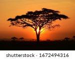 Beautiful sunset at serengeti...