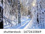 Winter Sunset Snow Forest Scene