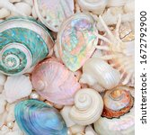Seashell Abstract Background...