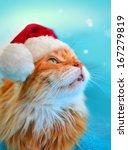 Funny Cat In Santa Claus Hat...