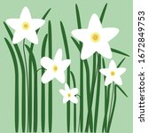 Narcissus Flower Field With...