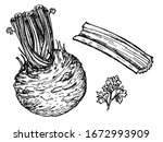 celery with stalks  greens and...   Shutterstock .eps vector #1672993909