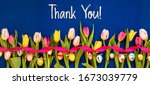 Banner With Colorful Tulip ...