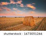 Rural Landscape Field Meadow...