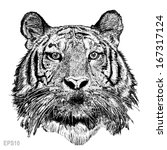 tiger sketch line with vector... | Shutterstock .eps vector #167317124