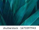 Green Leaf Texture  Dark Green...