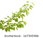 collection of tree branches on... | Shutterstock . vector #167345486