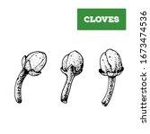 cloves hand drawn vector... | Shutterstock .eps vector #1673474536