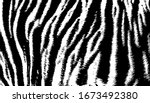 background texture tiger stripe ...   Shutterstock .eps vector #1673492380
