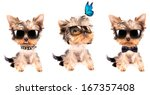 Puppy Yorkshire Terrier  Set O...