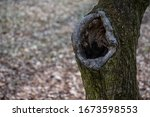 Big Hole In The Tree
