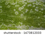 Moss And Mold Affect The...