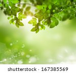 fresh and green leaves  | Shutterstock . vector #167385569