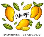 mango set. hand drawn mango ... | Shutterstock .eps vector #1673972479