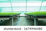 planting seedlings of farmers...   Shutterstock . vector #1674946480