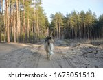 Wolf In The Forest. Back View