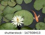 Goldfish In Lotus Pond