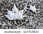 Two Maple Leaves  Made Of Snow