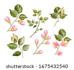 Watercolor Twig And Bud Set. ...