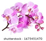 Pink flower phalaenopsis orchid ...