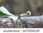 fluffy caterpillar crawling on... | Shutterstock . vector #1675550239