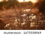 dry plants back light sun set... | Shutterstock . vector #1675558969