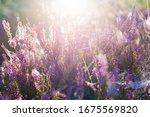 forest floor of blooming...   Shutterstock . vector #1675569820