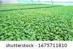 growing seedlings of farmers to ...   Shutterstock . vector #1675711810