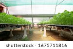 the cultivation of seedlings of ...   Shutterstock . vector #1675711816