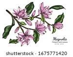 pink magnolia flower and leaf... | Shutterstock .eps vector #1675771420