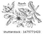 magnolia flower and leaf... | Shutterstock .eps vector #1675771423
