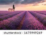 A Lonely House Into Lavender...