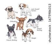 Portrait Of A Dog Puppies. Set...