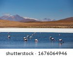 Pink Flamingos In Salt Lagoon ...