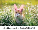 Natural Background With Cute...