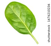 Fresh Spinach Leaves Isolated ...